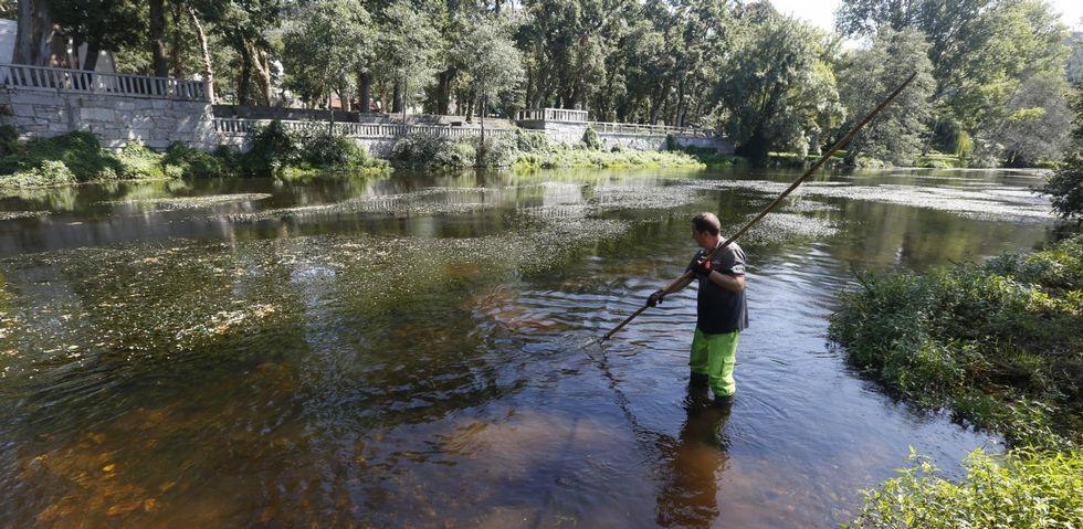 Los operarios utilizan un rastrillo para arrancar las algas del fondo del río y las depositan en un lateral para recogerlas después.
