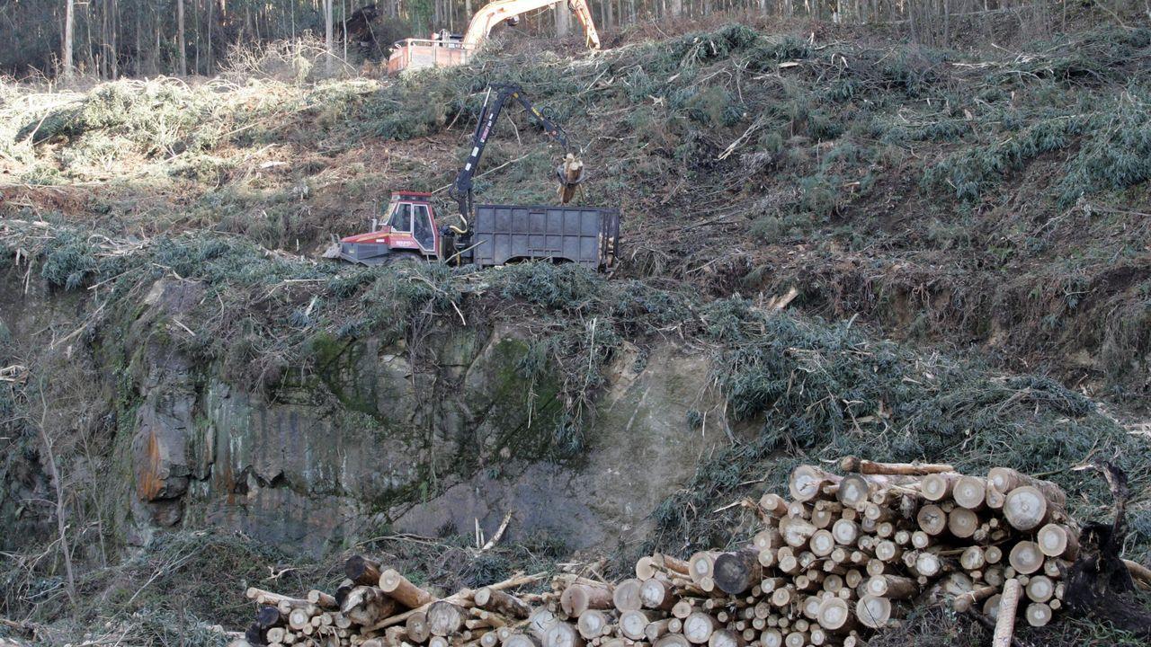 Así es la planta de biomasa Greenalia.Cubierta realizada con madera de eucalipto