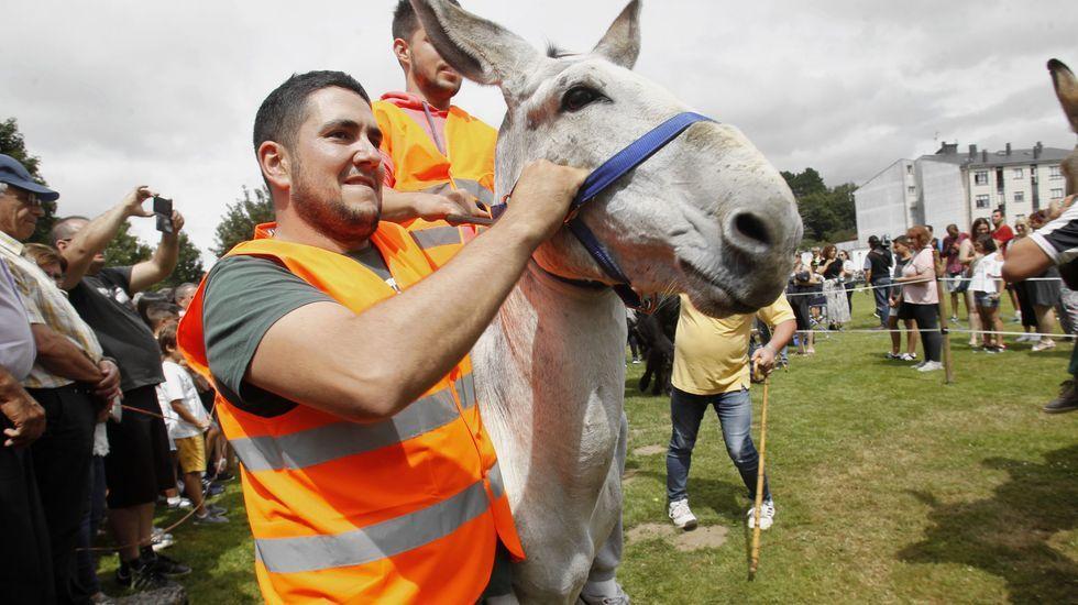 El público siguió atentamente el desempeño de los burros y sus jinetes