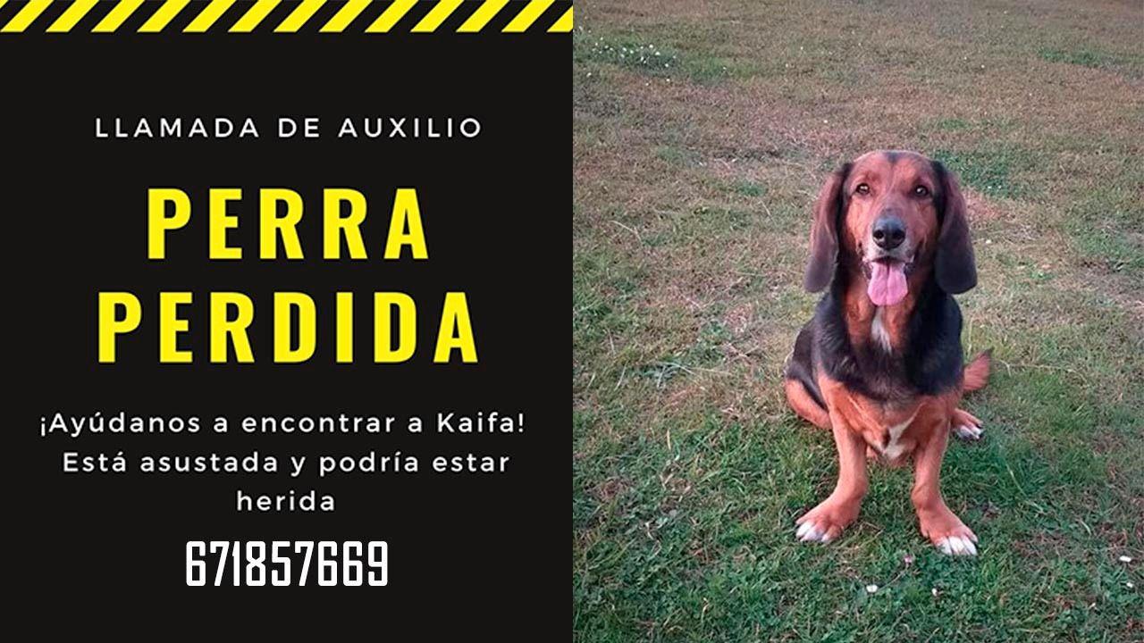 La calima complica la circulación y el tráfico aéreo en Canarias.Imagen de Kaifa, la perra perdida en Oviedo