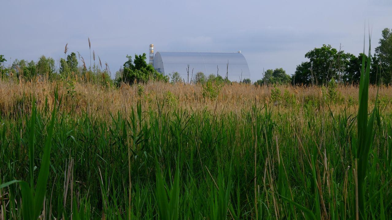 Azbuchyn lake, Zona de Exclusión de Chernobyl. Zona de charcas a sólo un kilómetro de la central nuclear, que se ve al fondo. Mayo de 2019. Autor: Germán Orizaola