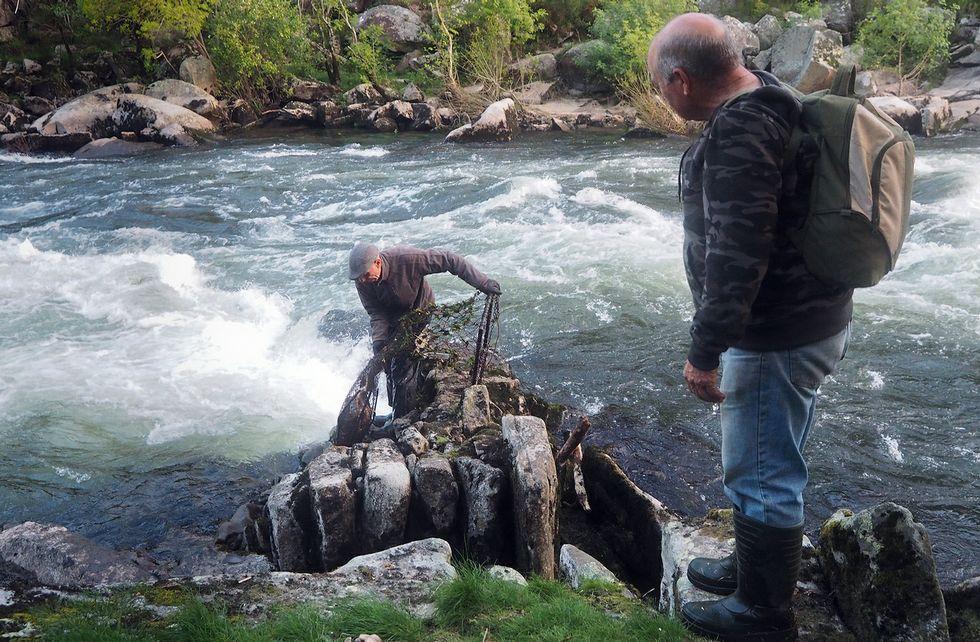 Espectáculo. Al igual que en Herbón, en Carcacía la pesca tradicional de la lamprea es un espectáculo digno de ver, por los sitios a lo que llegan los pescadores en el río para echar las redes y por el recorrido a pie que realizan.