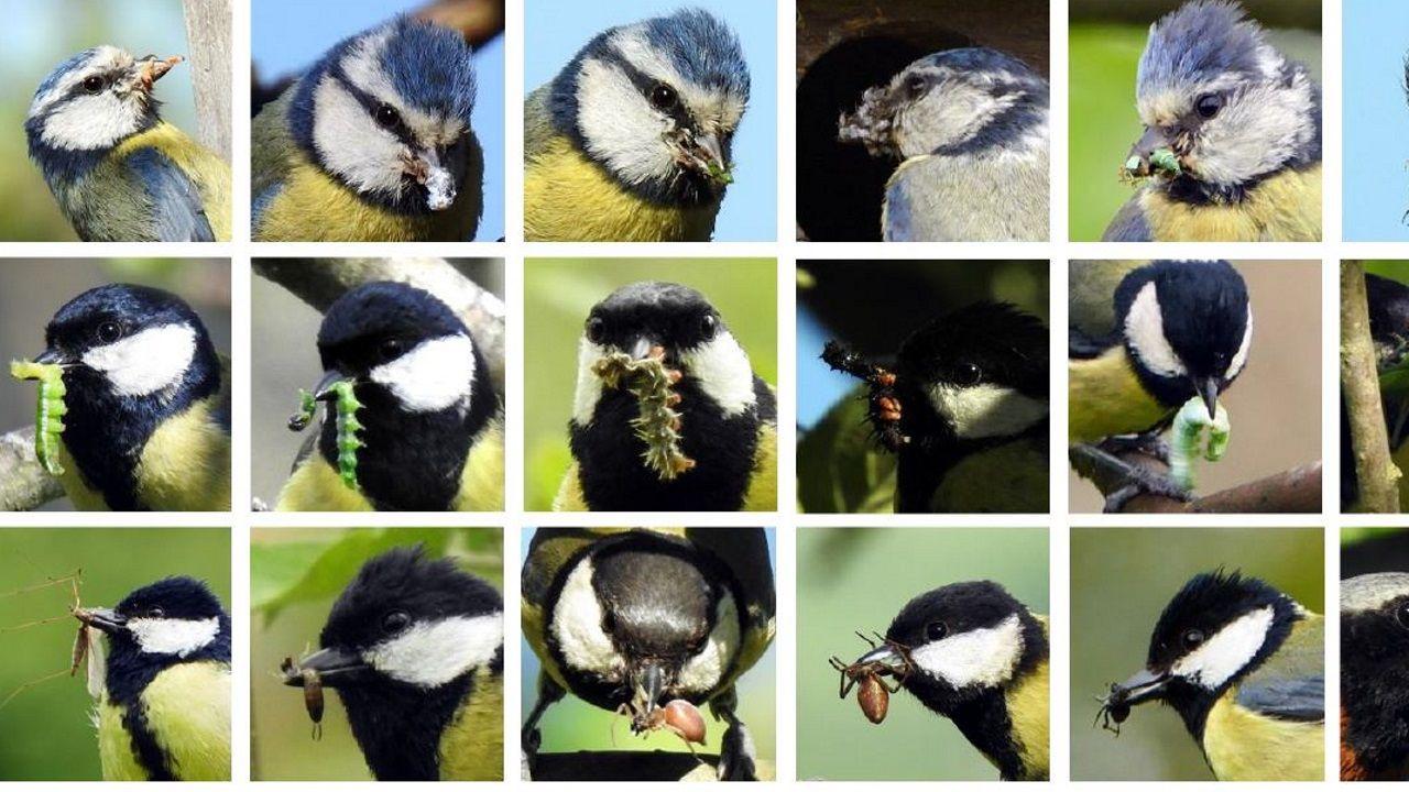 Pájaros comiendo diferentes especies de insectos
