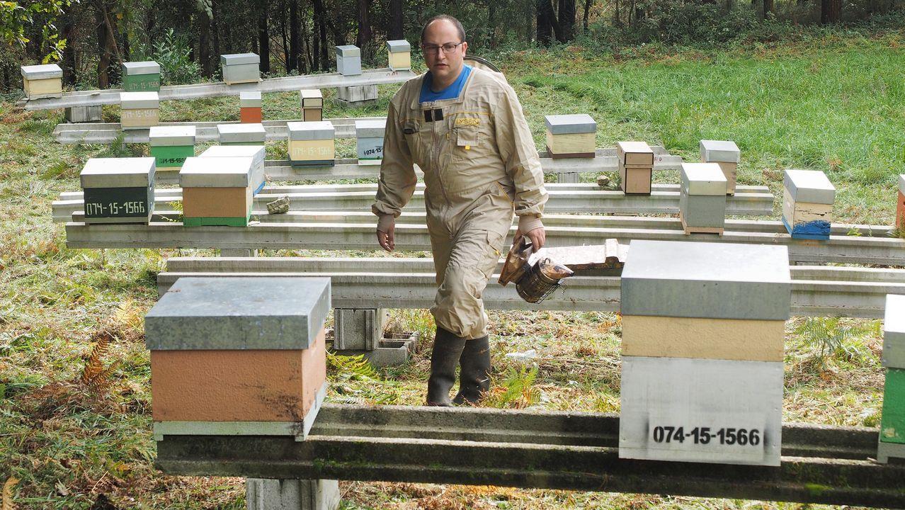 Una abeja se escapa de la trampa selectiva para velutinas.Trampa instalada para capturar avispas asiáticas