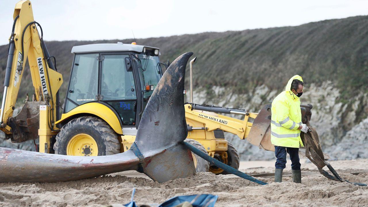 Los técnicos de la red de varamientos de cetáceos de Asturias llevan a cabo la operación de retirada del animal muerto