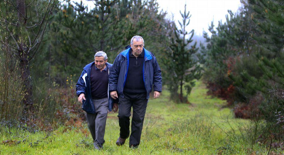 La comunidad a la que pertenecen Julián y Luis gestiona 600 hectáreas; en el Xiabre solo Saiar tiene más terreno a su cargo.