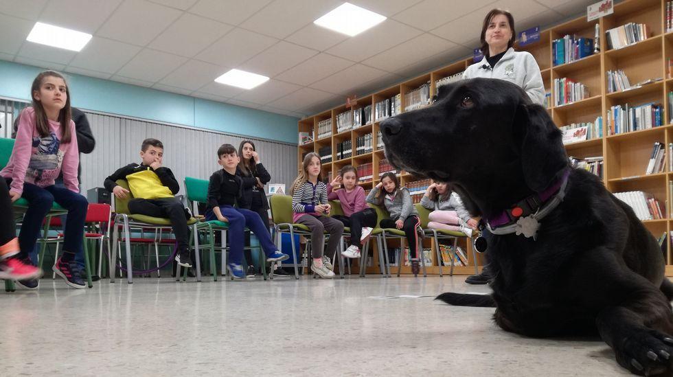 Connor, un profesor de apoyo sobre tres patas