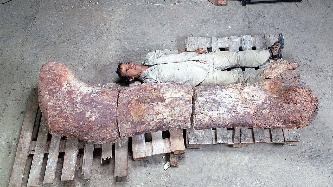 Los restos del dinosaurio más grande del mundo.Reproducción de un neandertal del Museo de Düsseldorf