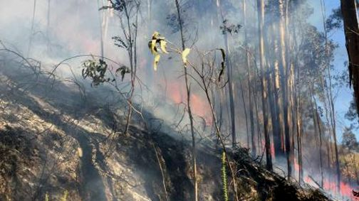 Incendio forestal de Naves