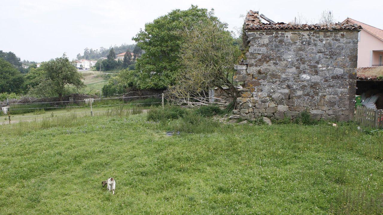 Dos detenidos por tráfico de drogas intentando introducir marihuana en Asturias