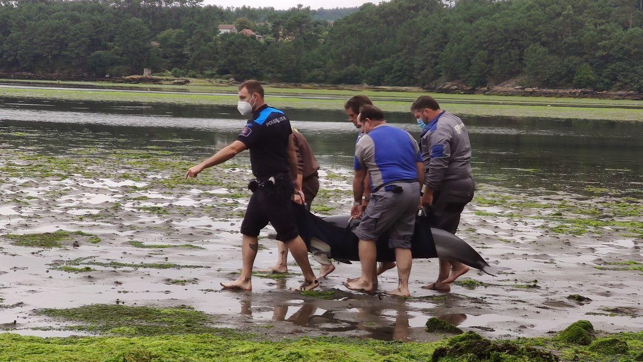 Cuatro delfines quedaron varados hace una semana debajo del puente de la autovía en Taragoña
