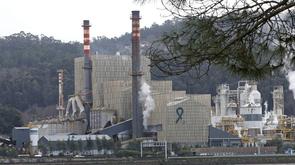 Pontevedra, normalidad laboral en la industria en el primer lunes en estado de alarma.El bosque de la Devesa da Rogueira se extiende por las faldas del monte Formigueiros
