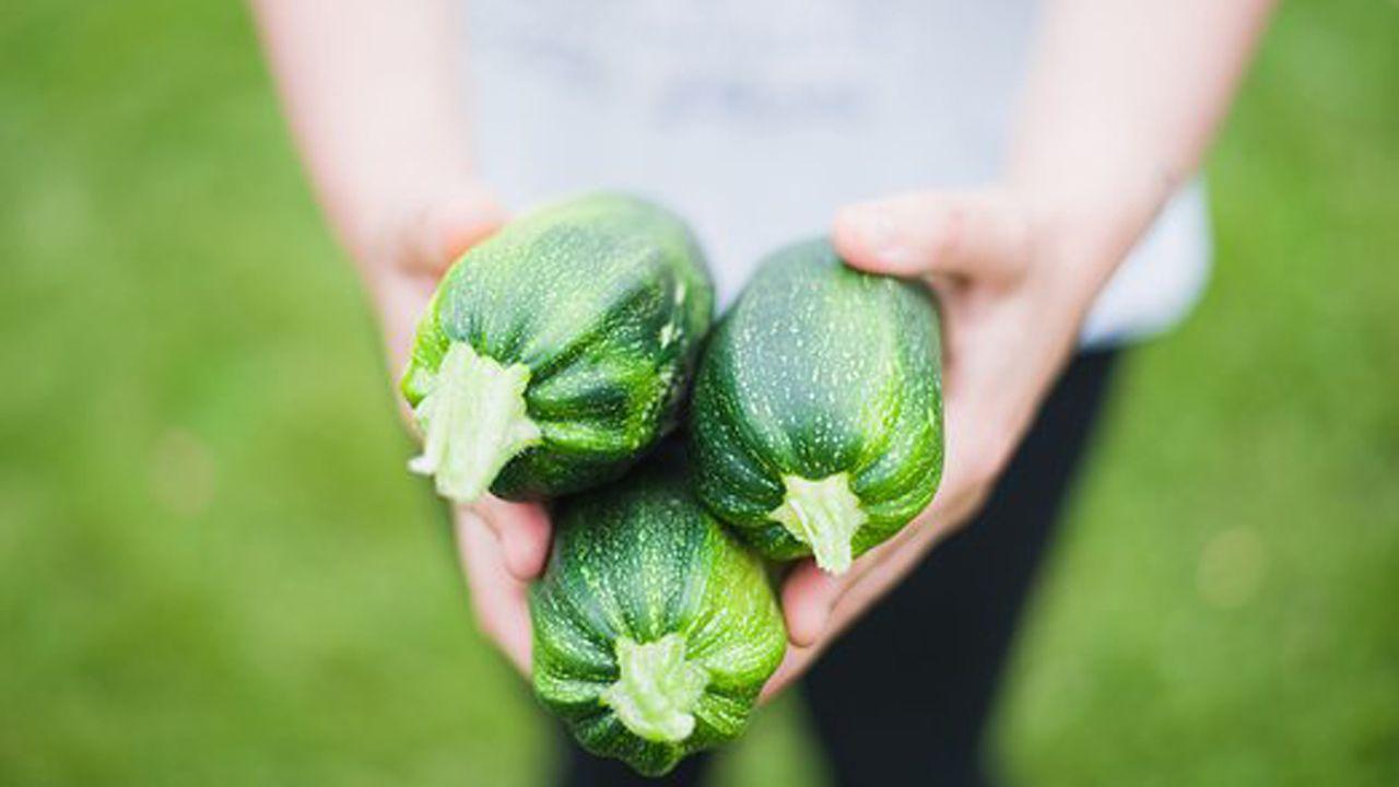 Un agricultor enseña tres calabacines