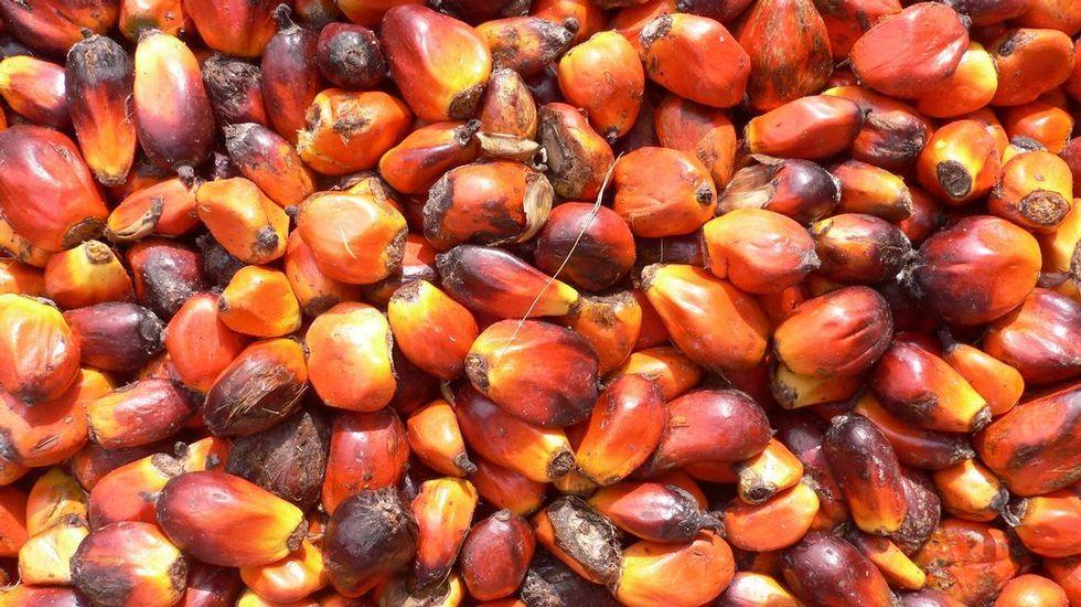 La Antártida se está volviendo verde.El aceite de palma, que se obtiene de la fruta de la palma aceitera, en crudo es una fuente de vitamina E