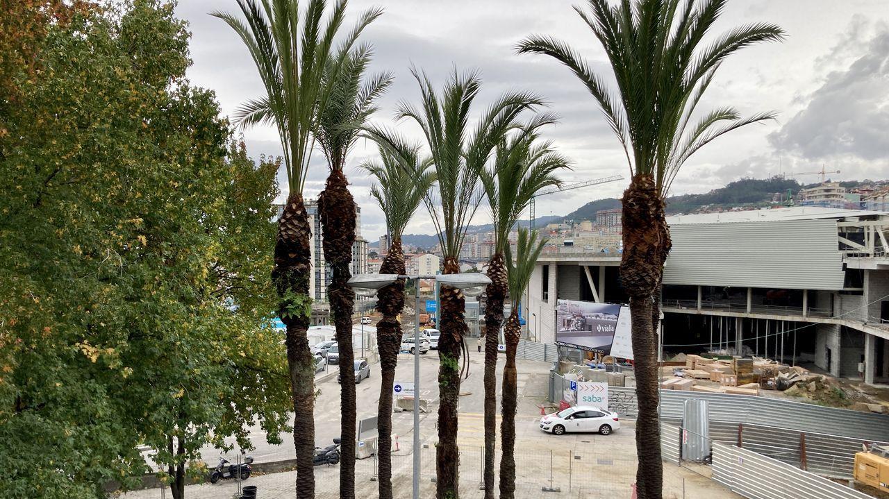 Poda en las palmeras del parque de Via Norte.Un Alvia pasando con la zona de Zamora en la que se abrirá el nuevo tramo de alta velocidad