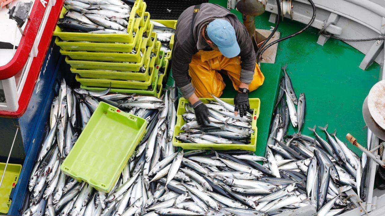 Imagen de archivo de un pesquero de artes menores descargando xarda en el puerto de Burela, líder en Galicia en ventas de ese pescado azul de temporada