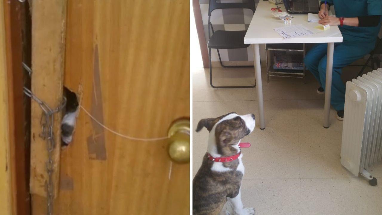 Rescate de un perro abandonado en una casa «okupada» en Gozón.La plataforma e-Film de las bibliotecas asturianas, en la que se pueden visionar peliculas, series y documentales