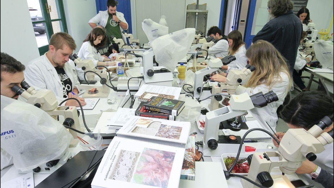Los alumnos salen por la mañana al mar a recoger muestras de fauna y flora que luego analizan en el laboratorio