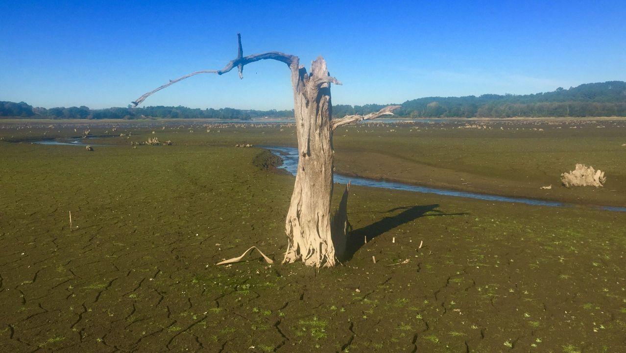 Imagen del embalse de Abegondo-Cecebre durante la sequía del 2017.Abejas en un panal