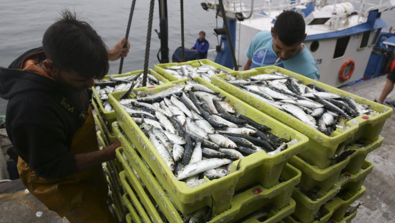 Sardinas como estas que se descargan en A Coruña (foto de archivo) son claves para la pesca gallega de litoral