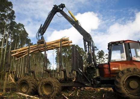 El sector forestal tienen gran peso en la economía de la zona.