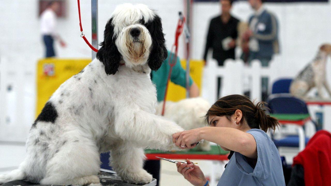 Las peluquerías caninas son uno de los negocios con más tirón, después de la alimentación y la sanidad