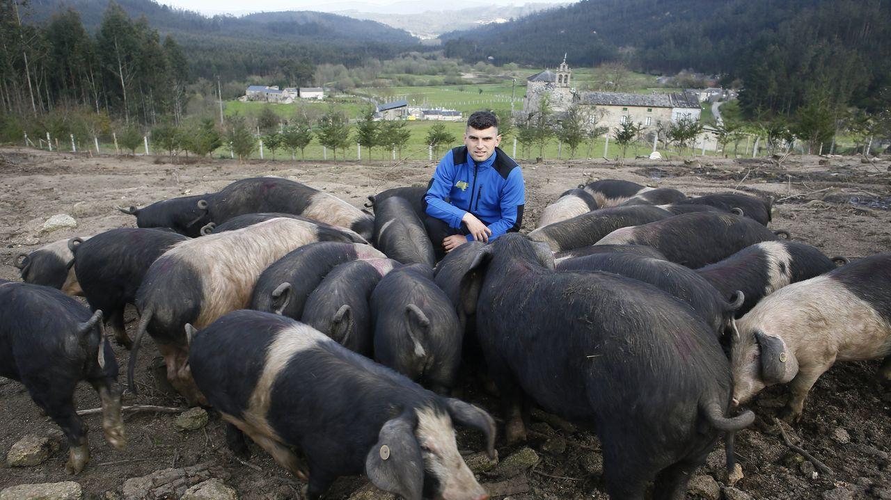 El Hospital Público da Mariña sigue vacunando frente al covid-19.Nando López, con sus porcos celtas, en Couboeira, Mondoñedo
