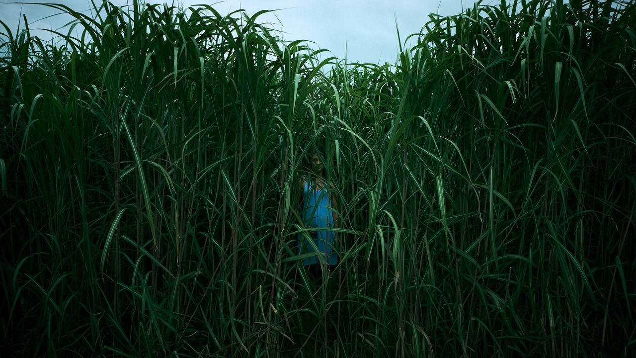 El filme «In the Tall Grass», dirigido por Vincenzo Natali, adapta una obra del escritor estadounidense Stephen King