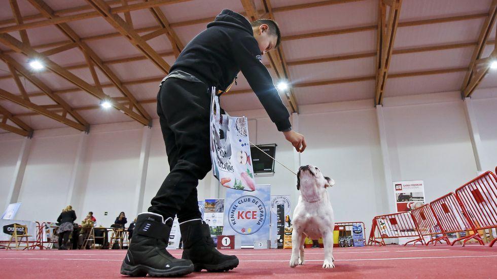 III Exposición Canina de Ponte Caldelas