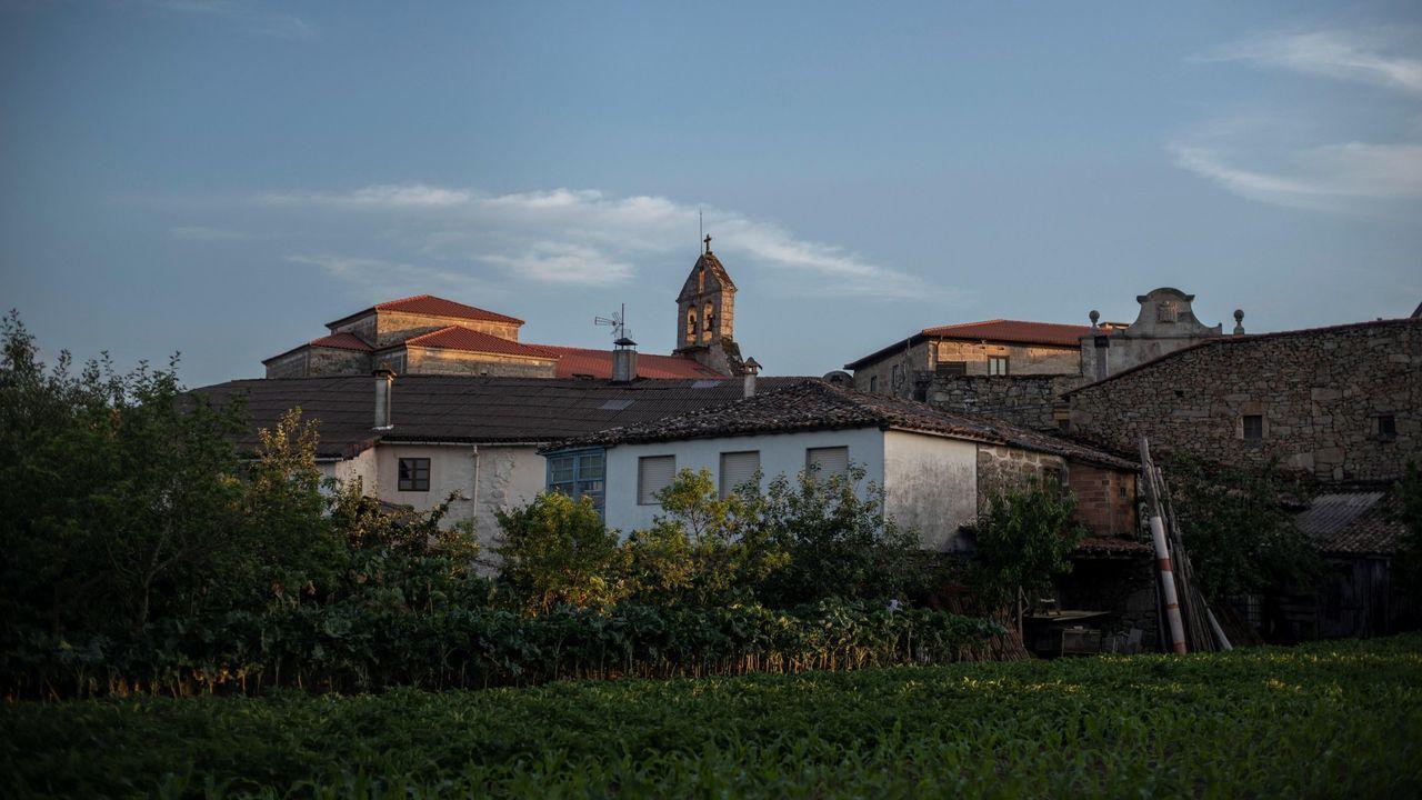Trigo cosechado en una finca del municipio de Lugo