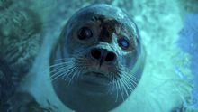 Una foca se refresca en el Zoo de Belgrado, durante una ola de calor en Serbia
