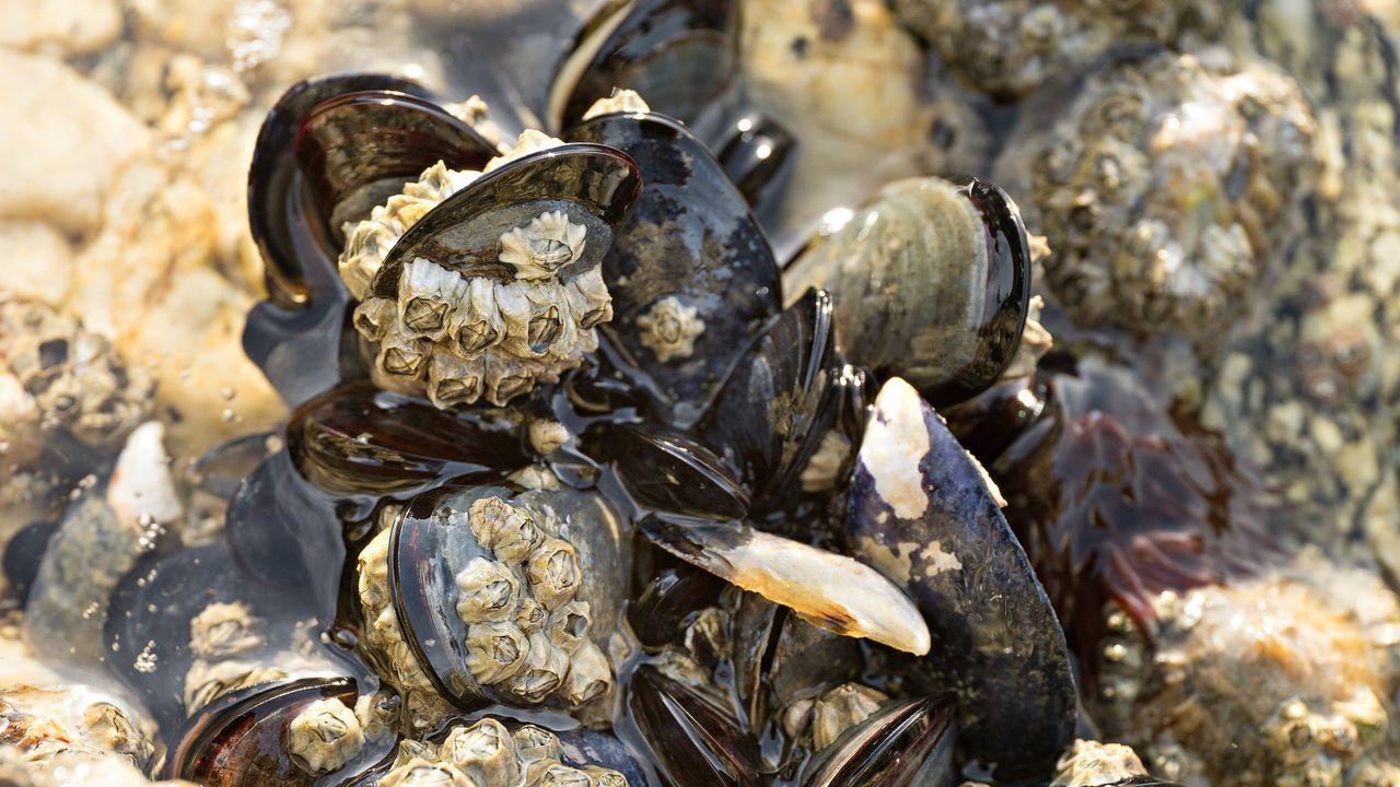 Pontevedra llora a Ravachol.Enormes olas rompen en el paseo marítimo de San Esteban de Pravia, en Asturias.