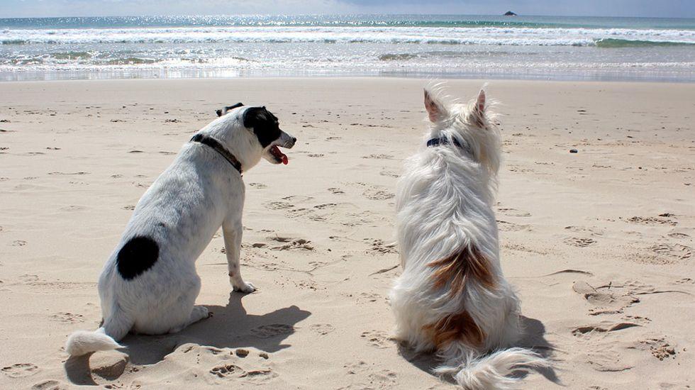 alergia, polen,.Perros en la playa