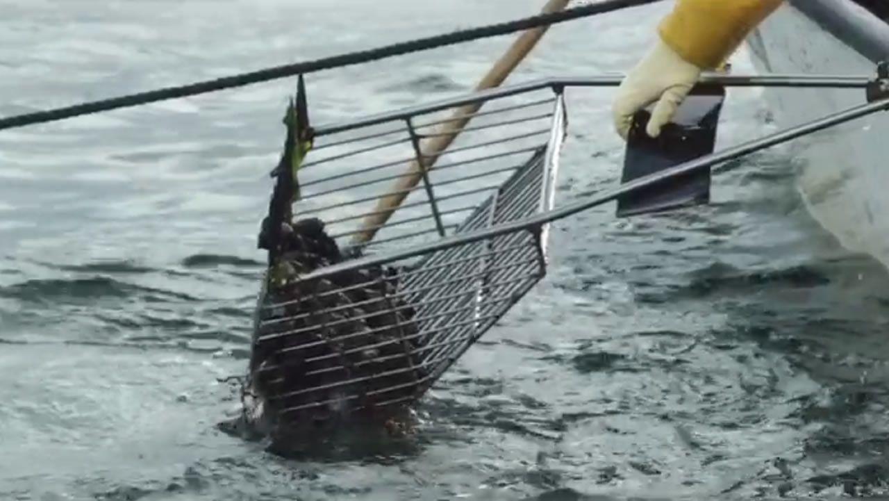 El impacto socioeconómico de la pesca