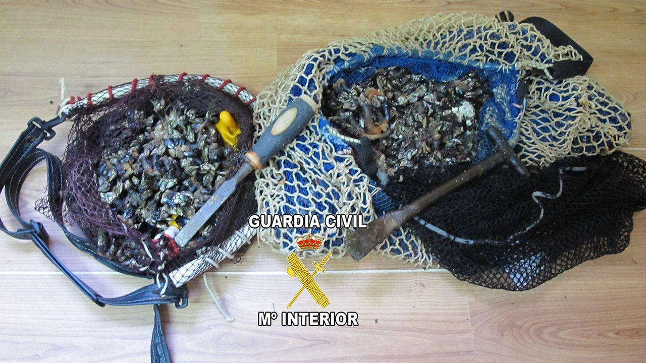 Marisco decomisado en Asturias