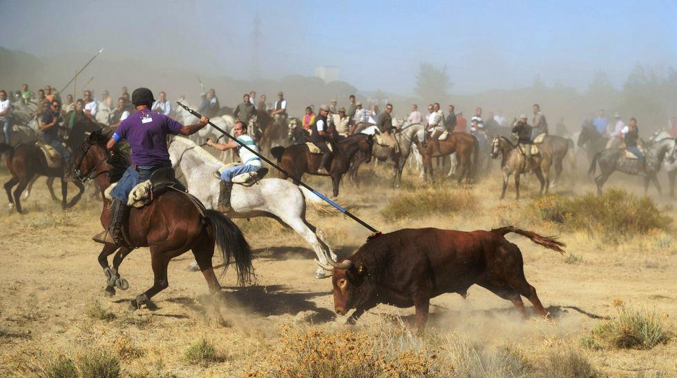 Fiesta del toro de la Vega, en Tordesillas