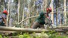 Los trabajadores forestales ya solían guardar las distancias en los montes, por seguridad, como se ve en esta foto de archivo