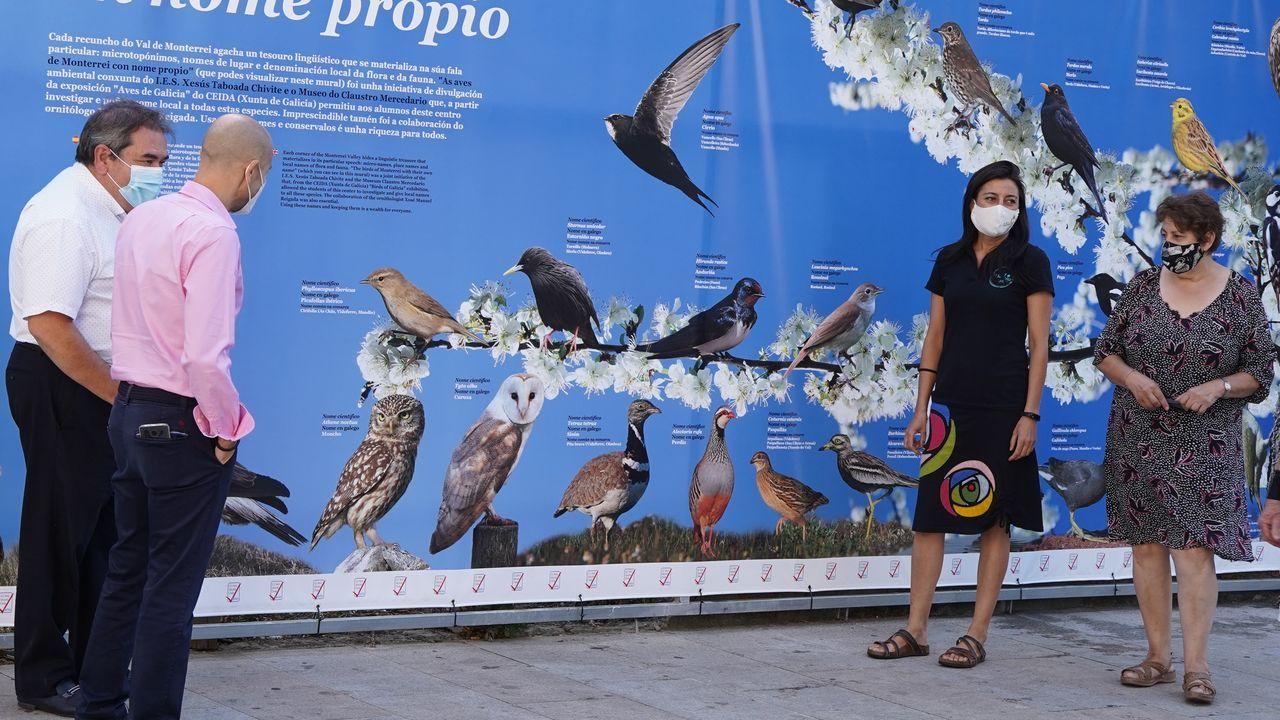 Los refugios para las aves migratorias en las Rías Baixas.Una pareja de cigüeñas en un nido sobre una torreta de la estación de Monforte, en una imagen de archivo