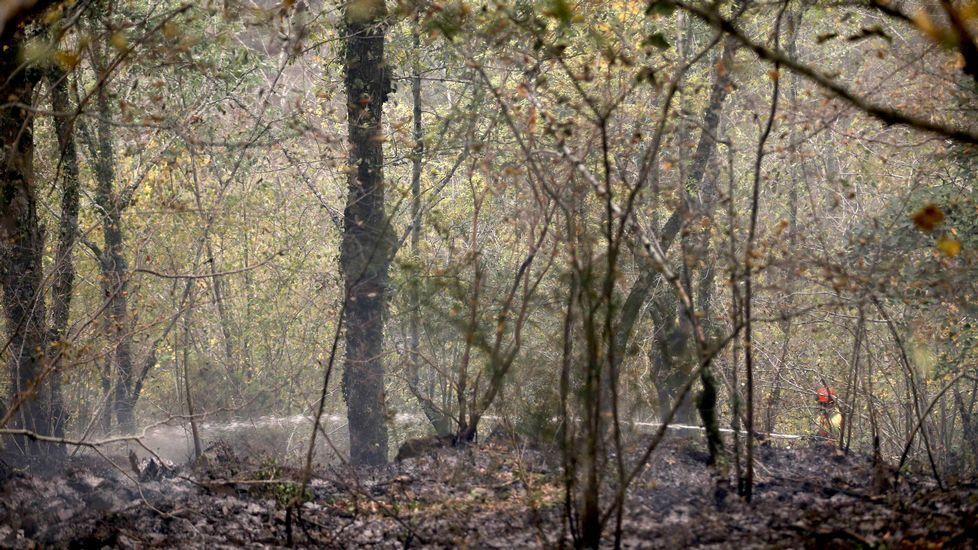 Escape en las baterias de coque de Avilés de Arcelor.Un bombero participa en las labores de extinción del incendio declarado en la Reserva de la Biosfera de Muniellos (Asturias), considerado como el robledal mayor y mejor conservado de España