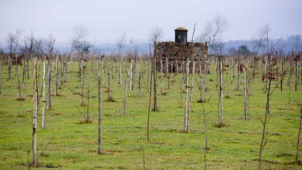 La creación del bosque fue decidida por el Concello de Lugo dentro del programa LIFE