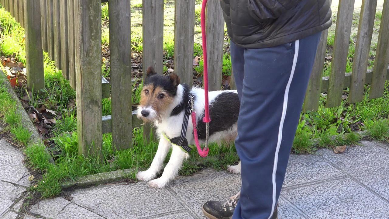 Los dueños del perro que cayó por una ventana en Lugo, absueltos.Numerosos inmuebles de esta zona de las afueras de la capital lucense están tapadas con ladrillo para evitar usurpaciones