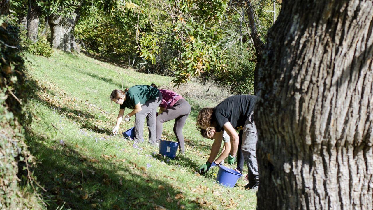 Membros de Amarelante recollen castañas nunha imaxe de arquivo