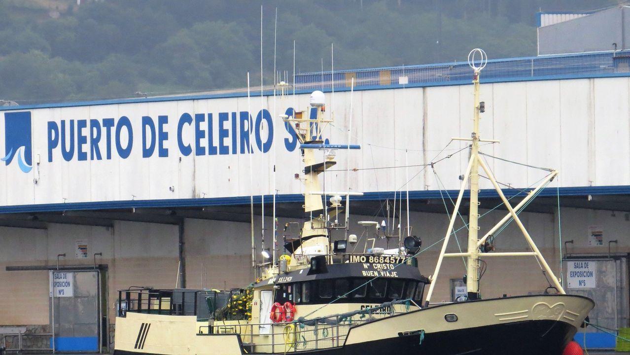 La lonja de Puerto de Celeiro, que coopera con el colegio de Celeiro en el acto divulgativo para escolares