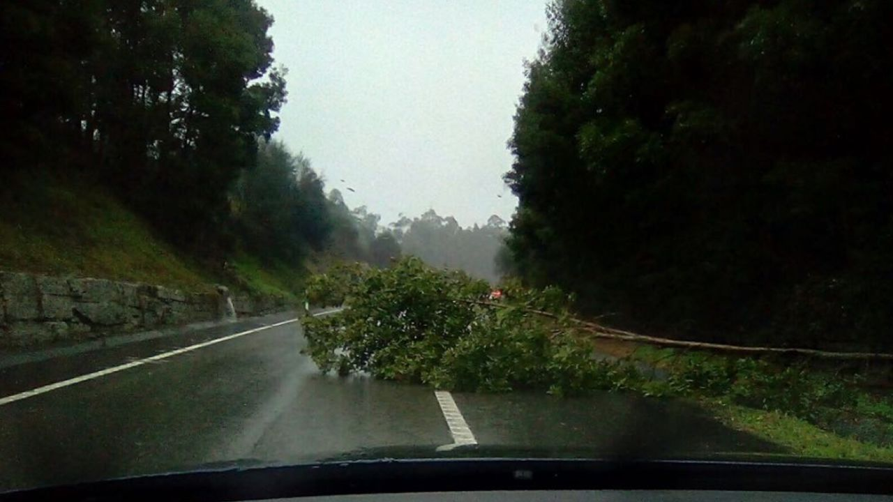 Árbol caído en la localidad pontevedresa de Beluso
