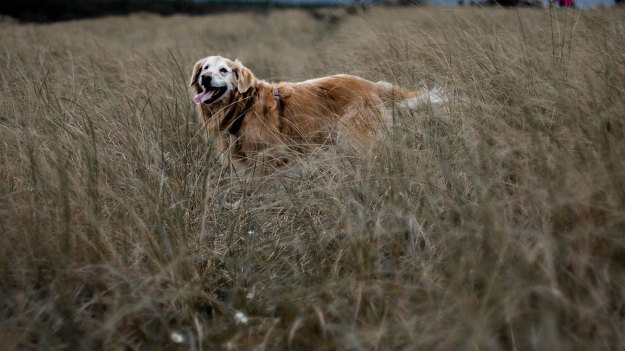 Perro en un campo de hierba alta