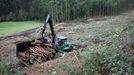 La actividad forestal está muy presente en diferentes comarcas de Lugo