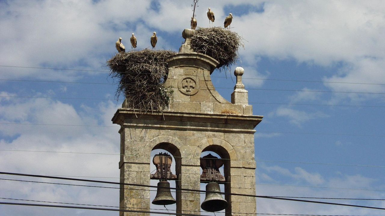 Investigación de la Guardia Civil en una explotación ganadera de Gozón.Nidos de cigüeña en la espadaña de la iglesia de la parroquia de Ribas Altas, en Monforte