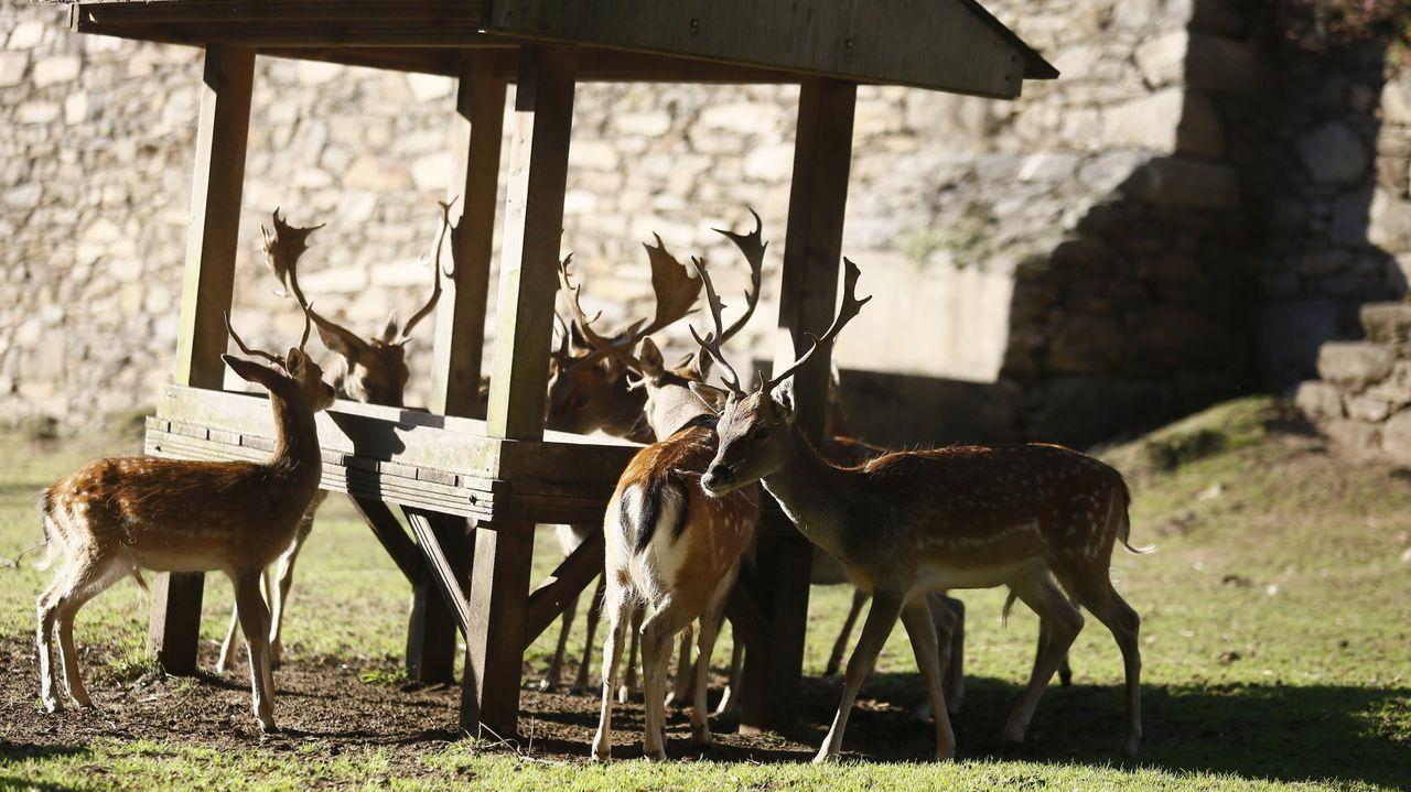 En la reserva de San Roque conviven gamos, un ñandú, ovejas de Camerún, burros, ponis y mastines