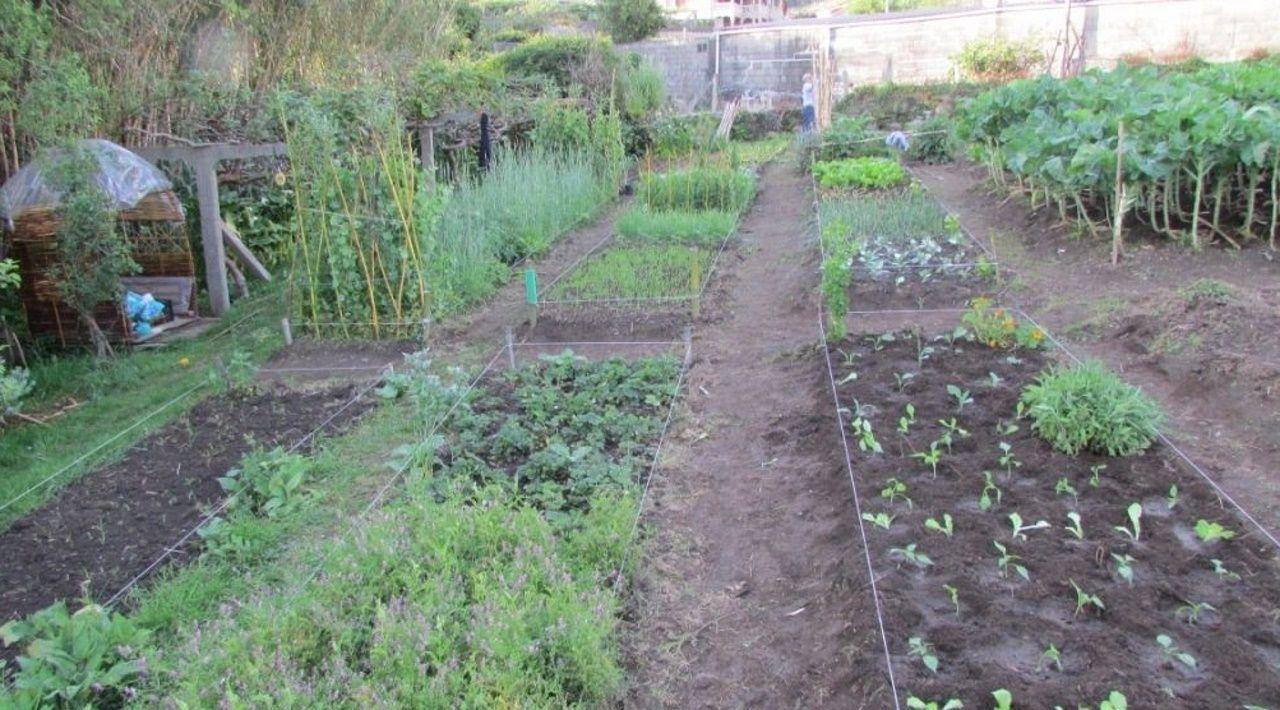 El verde de las hortalizas se nota en las plazas de abastos (en la imagen, la de Lugo)