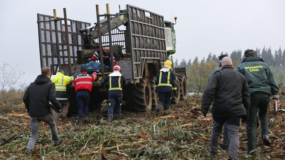 Muere un trabajador en una tala de eucaliptos en la aldea de Cibreiro, en Friol